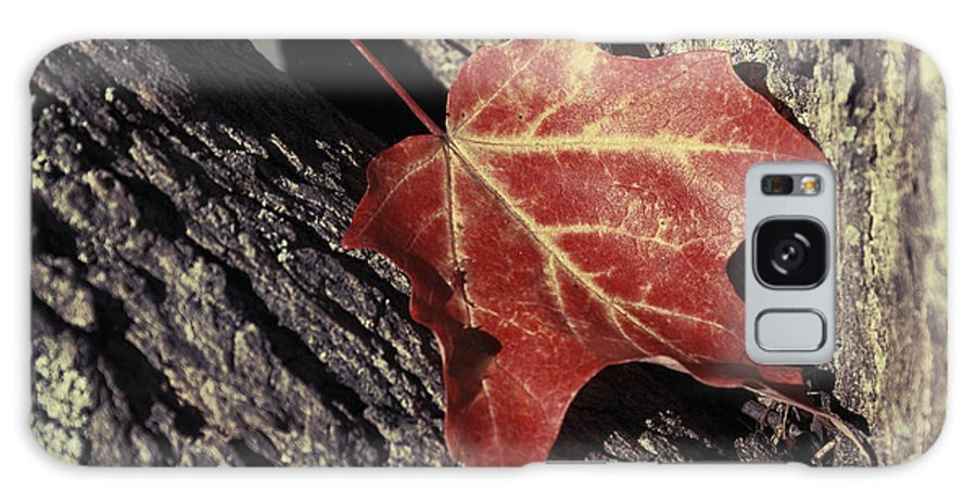 Leaf Galaxy S8 Case featuring the photograph Autumn Find by Aimelle