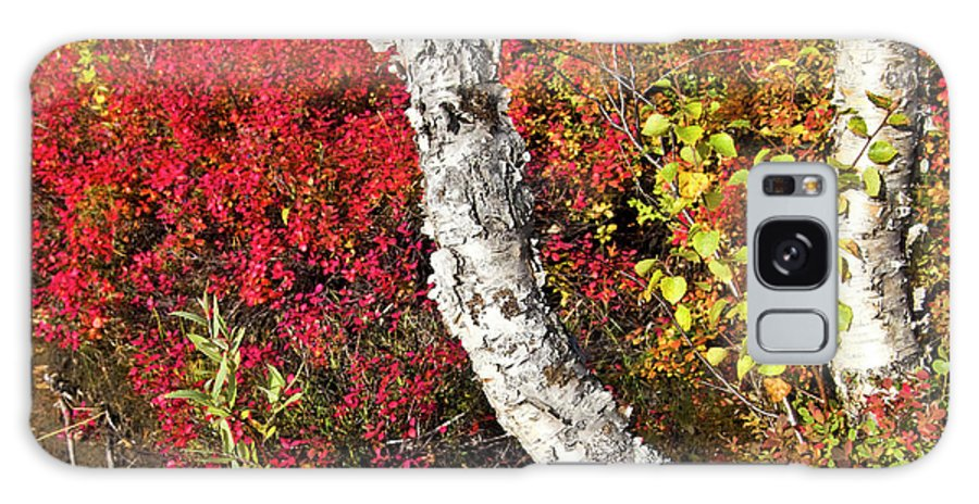 Tree Galaxy S8 Case featuring the photograph Autumn Foliage In Finland by Heiko Koehrer-Wagner