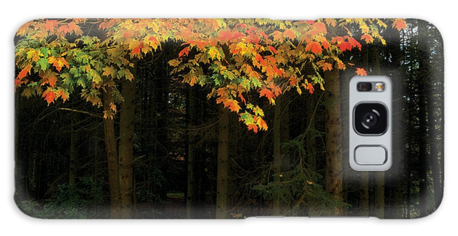 Autumn Galaxy S8 Case featuring the photograph Autumn Forest Leaves by Steve Somerville