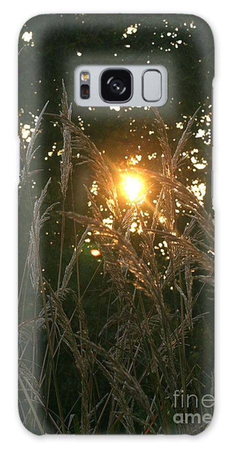 Light Galaxy S8 Case featuring the photograph Autumn Grasses In The Morning by Nadine Rippelmeyer