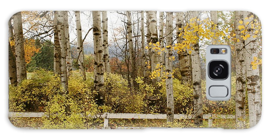 Grove Galaxy Case featuring the photograph Autumn Grove by Idaho Scenic Images Linda Lantzy