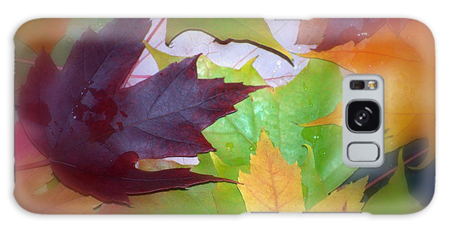 Trees Galaxy Case featuring the photograph Autumn by Larry Keahey