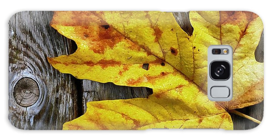Leaf Galaxy S8 Case featuring the photograph Autumn Leaf by Patricia Strand