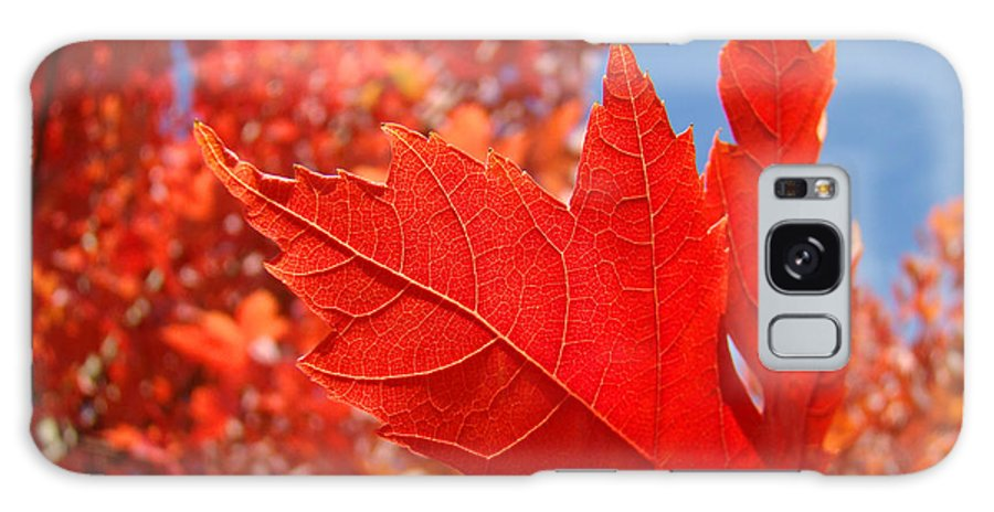 Autumn Galaxy S8 Case featuring the photograph Autumn Leaves Fall Art Red Orange Leaves Blue Sky Baslee Troutman by Baslee Troutman