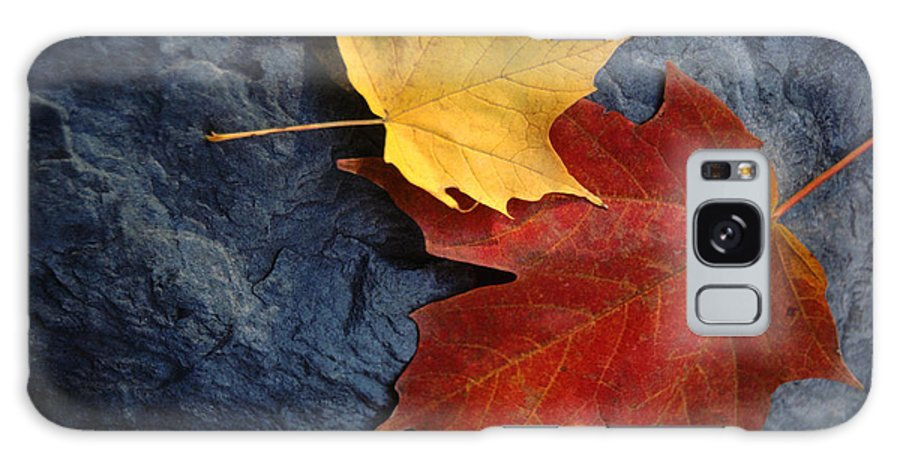 Leaf Galaxy Case featuring the photograph Autumn Maple Leaf Pair On Moody Rock by Anna Lisa Yoder