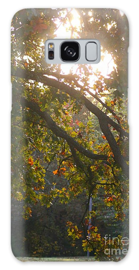 Autumn Galaxy S8 Case featuring the photograph Autumn Morning Glow by Nadine Rippelmeyer