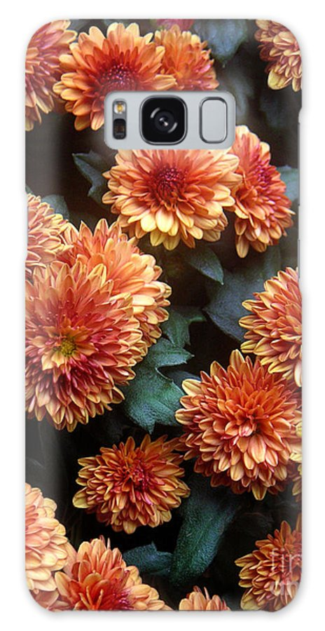 Nature Galaxy S8 Case featuring the photograph Autumn Mums - A Group Portrait by Lucyna A M Green