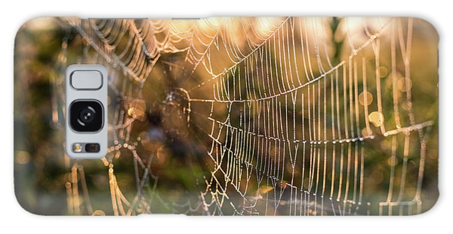 Nature Galaxy S8 Case featuring the photograph Autumn Orb Weaver by Alyssa Najewicz
