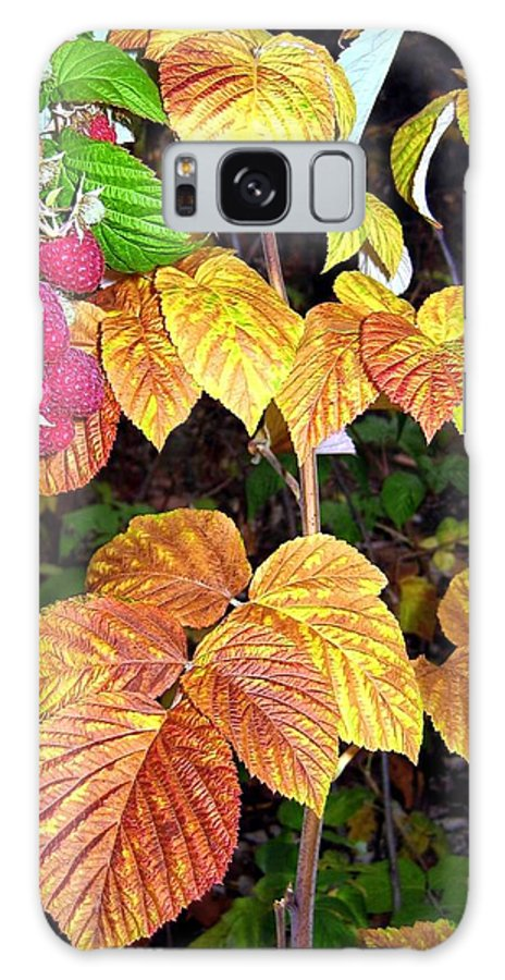 Autumn Galaxy S8 Case featuring the photograph Autumn Raspberries by Will Borden