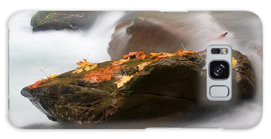 Leaves Galaxy S8 Case featuring the photograph Autumn Resting Place by Mike Dawson