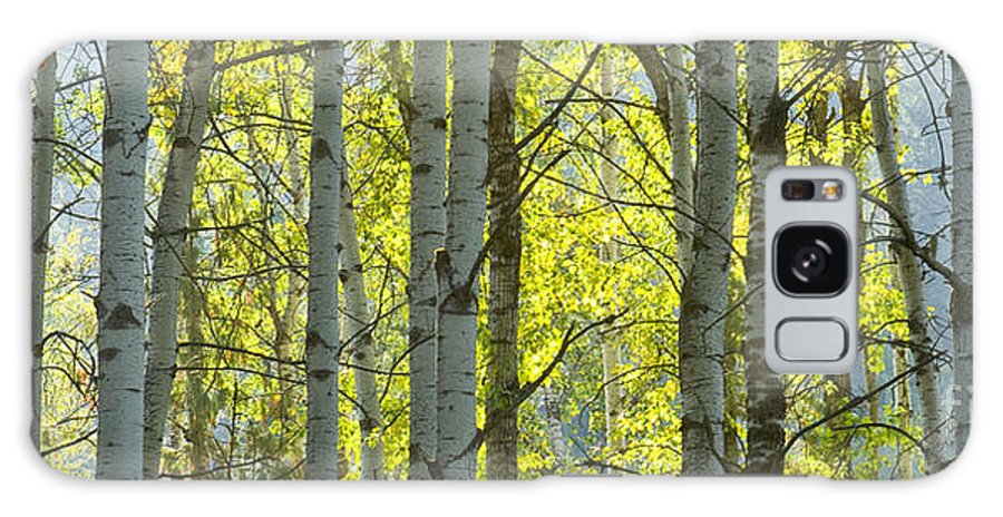 Trees Galaxy S8 Case featuring the photograph Autumn Through The Trees by Idaho Scenic Images Linda Lantzy