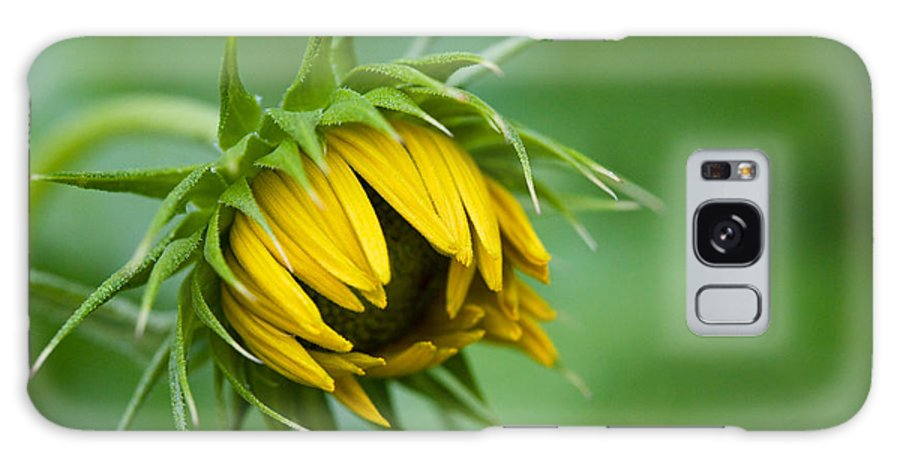 Sunflower Bud Opening Galaxy S8 Case featuring the photograph Awakening by Diane Macdonald