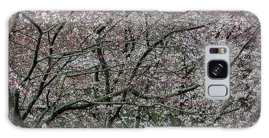 Dogwood Galaxy S8 Case featuring the photograph Awash In Cherry Blossoms by Doug Sturgess