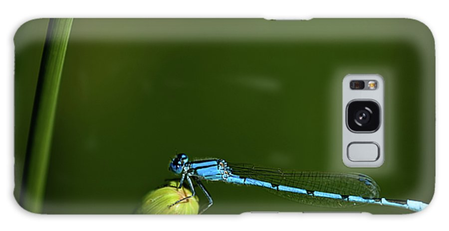 Azure Damselfly Galaxy S8 Case featuring the photograph Azure Damselfly-coenagrion Puella by Onyonet Photo Studios