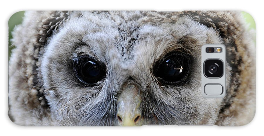 Galaxy S8 Case featuring the photograph Baby Barred Owl-2 by Keith Lovejoy