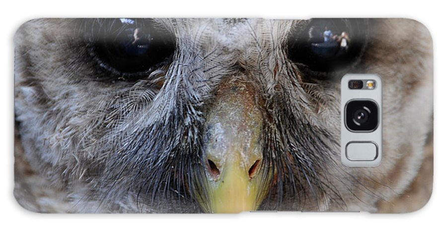 Galaxy S8 Case featuring the photograph Baby Barred Owl 3 by Keith Lovejoy