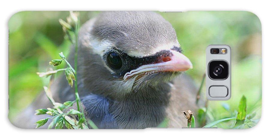 Animal Galaxy S8 Case featuring the photograph Baby Cedar Waxwing by Smilin Eyes Treasures