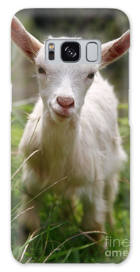 Animals Galaxy Case featuring the photograph Baby Goat by Gaspar Avila