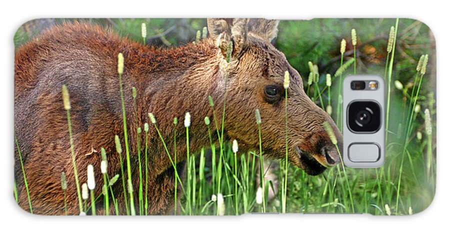 Moose Galaxy S8 Case featuring the photograph Baby Moose by Scott Mahon