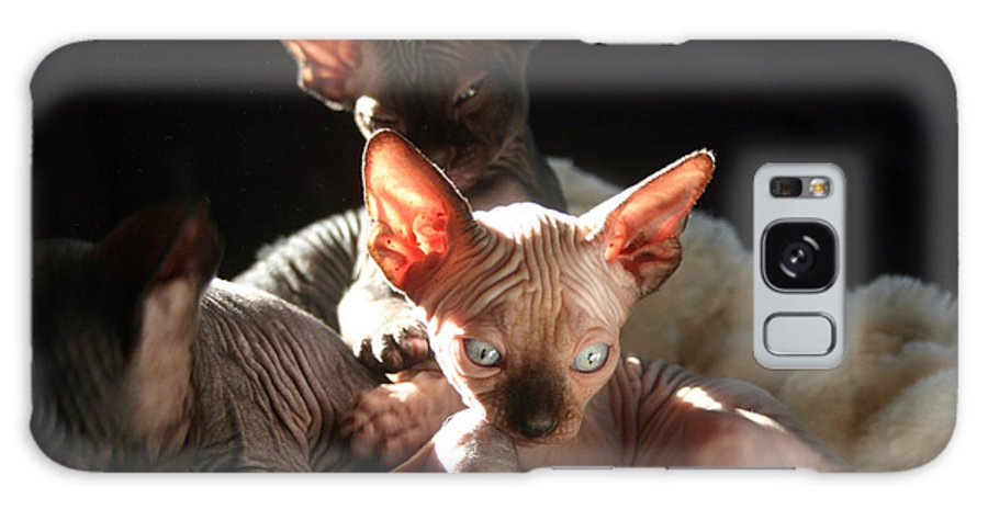 Photo Galaxy S8 Case featuring the photograph Baby Sphynx Cats by Ruben Flanagan