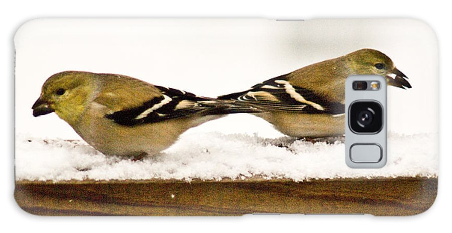 American Galaxy S8 Case featuring the photograph Back To Back American Gold Finches by Douglas Barnett