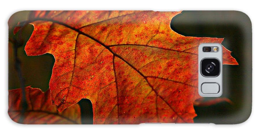 Fall Oak Leaf Leaves Orange Red Galaxy S8 Case featuring the photograph Backlit Leaf by Shari Jardina
