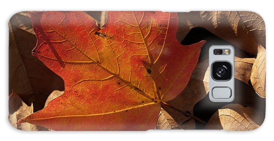 Leaf Galaxy Case featuring the photograph Backlit Sugar Maple Leaf In Dried Leaves by Anna Lisa Yoder