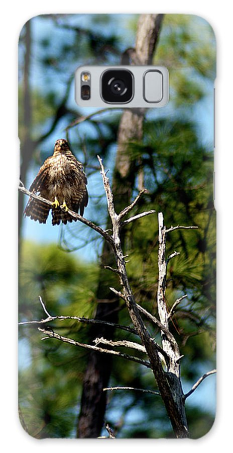 Hawk Galaxy S8 Case featuring the photograph Bad Feather Day by Frank Feliciano