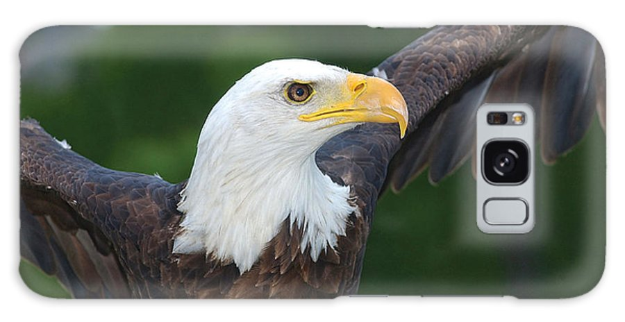 Eagle Galaxy S8 Case featuring the photograph Bald Eagle Close Up by Steve Somerville