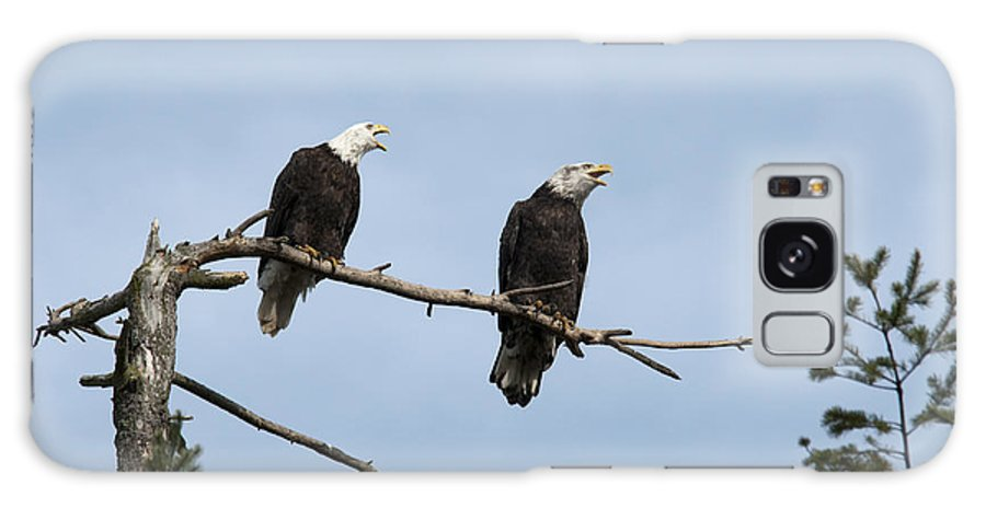 Bald Eagle Galaxy S8 Case featuring the photograph Bald Eagle Perch by Chad Davis