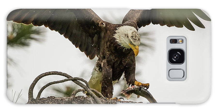 California Galaxy S8 Case featuring the photograph Bald Eagle Picking Up Fish by Marc Crumpler