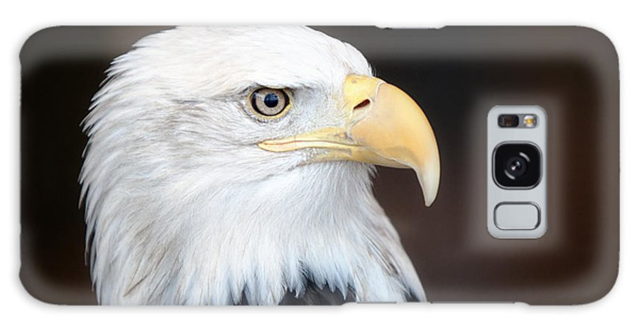 Bald Eagle Galaxy S8 Case featuring the photograph Bald Eagle Portrait by Al Mueller