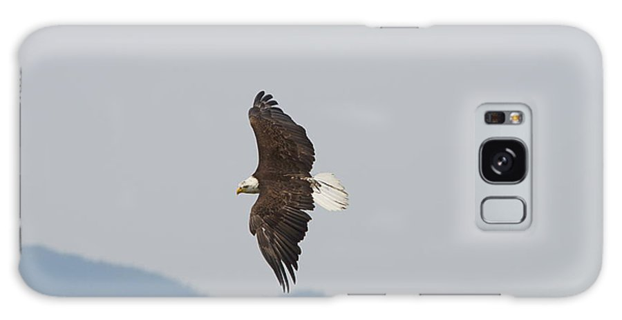 Bald Galaxy S8 Case featuring the photograph Bald Eagle Soaring by Norman Racine