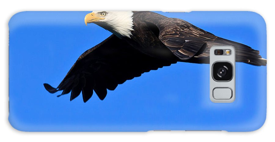 Washington Galaxy S8 Case featuring the photograph Bald Eagle by Tim Hauf