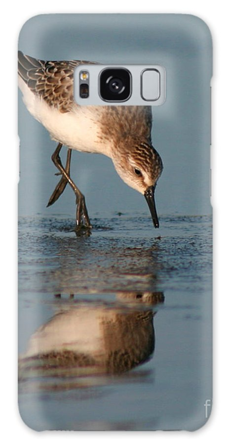 Sanderling Galaxy Case featuring the photograph Ballet Feeding Of A Sanderling by Max Allen