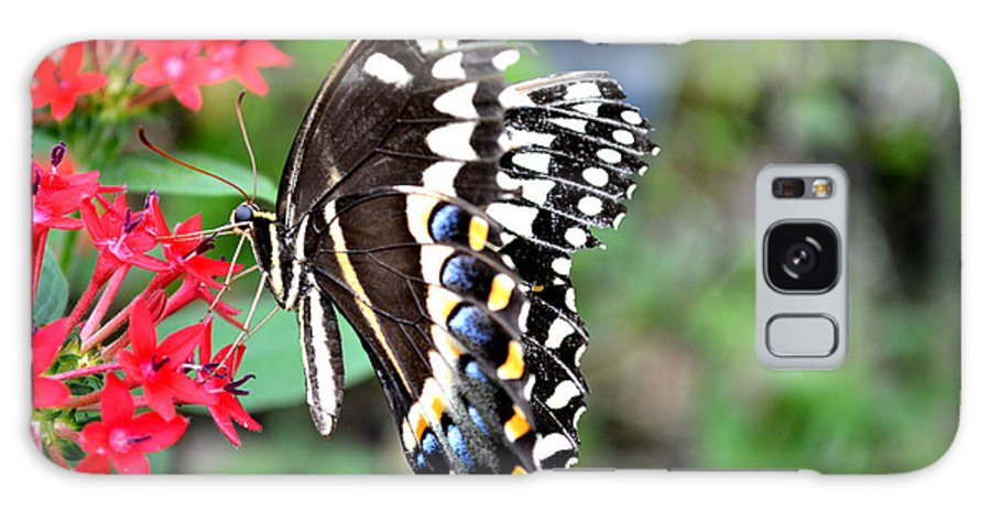 Butterfly Galaxy S8 Case featuring the photograph Baltimore Checker Spot Butterfly by Reva Steenbergen