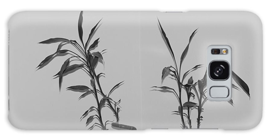 Black And White Galaxy S8 Case featuring the photograph Bamboo Shutes by Rob Hans