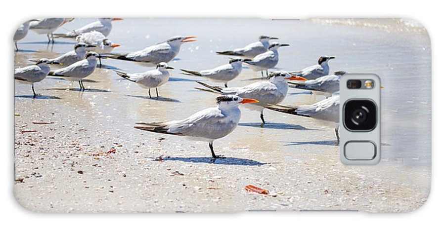 Terns Galaxy S8 Case featuring the photograph Band Of Brothers by J Darrell Hutto