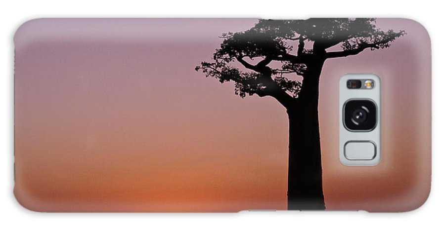 Madagascar Galaxy S8 Case featuring the photograph Baobab At Sunset by Michele Burgess