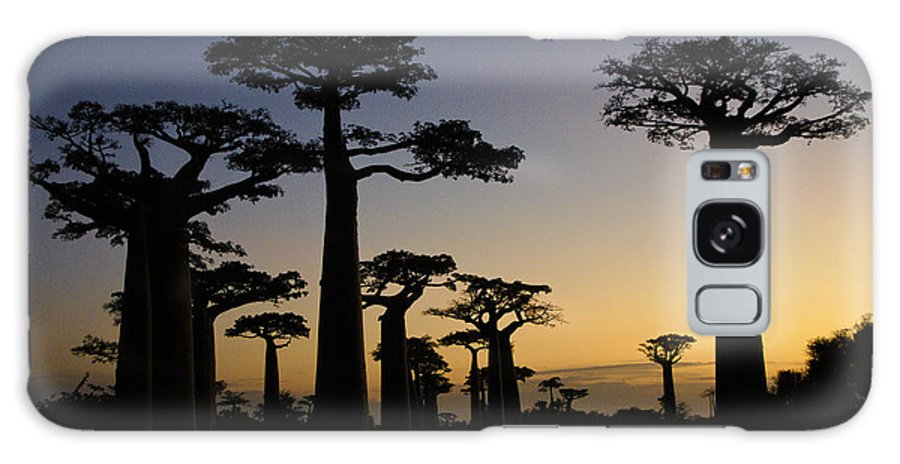 Madagascar Galaxy S8 Case featuring the photograph Baobab Forest At Sunset by Michele Burgess