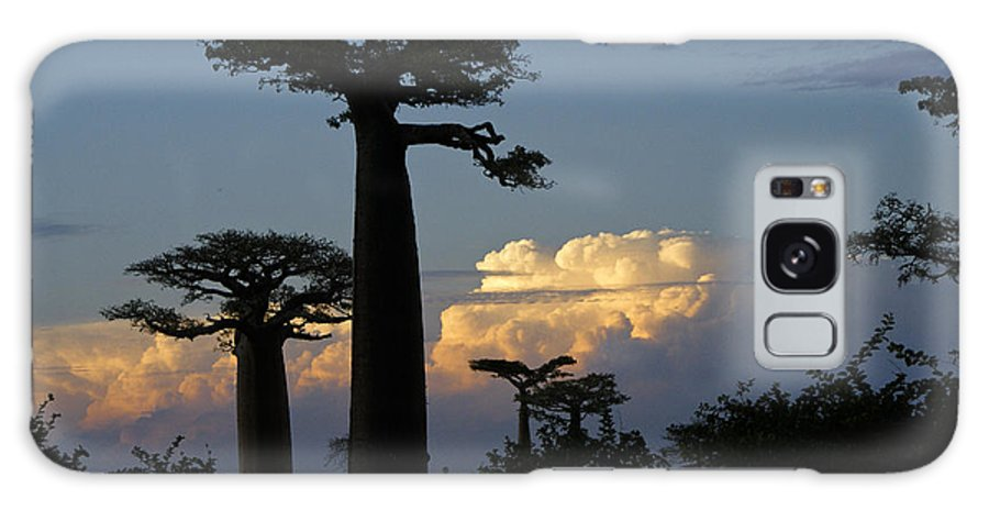Madagascar Galaxy S8 Case featuring the photograph Baobabs And Storm Clouds by Michele Burgess
