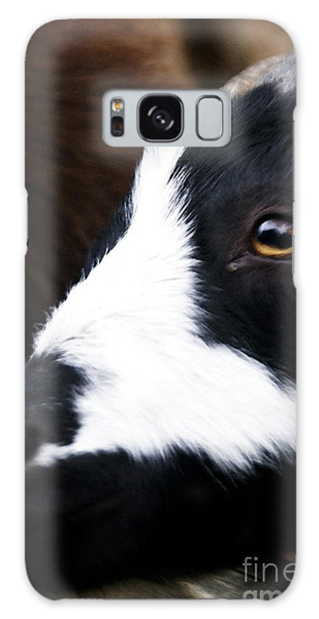 Billy-goat Galaxy S8 Case featuring the photograph Barnyard Billy by Linda Shafer