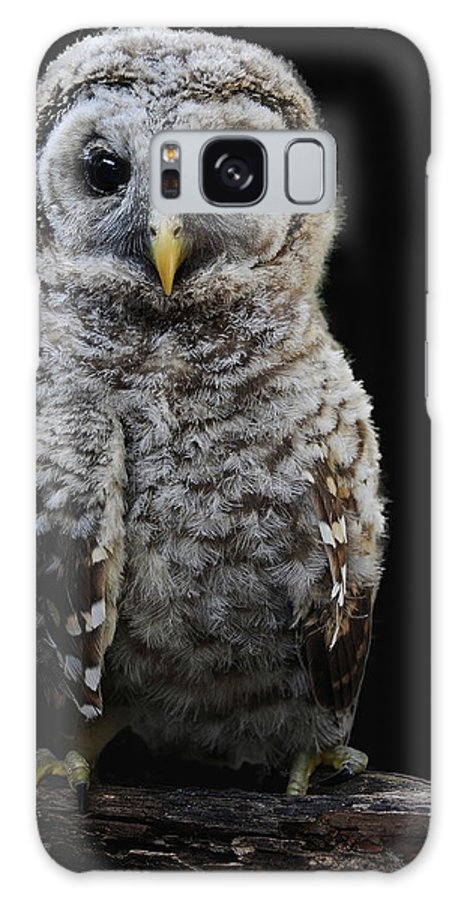 Galaxy S8 Case featuring the photograph Barred Owl Baby -4 by Keith Lovejoy