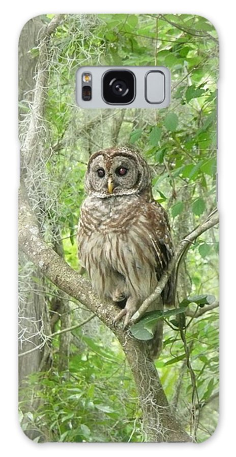 Nature Galaxy S8 Case featuring the photograph Barred Owl I by Kathy Schumann