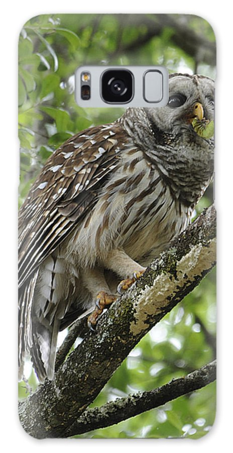 Barred Owl Galaxy S8 Case featuring the photograph Barred Owl With A Snack by Keith Lovejoy