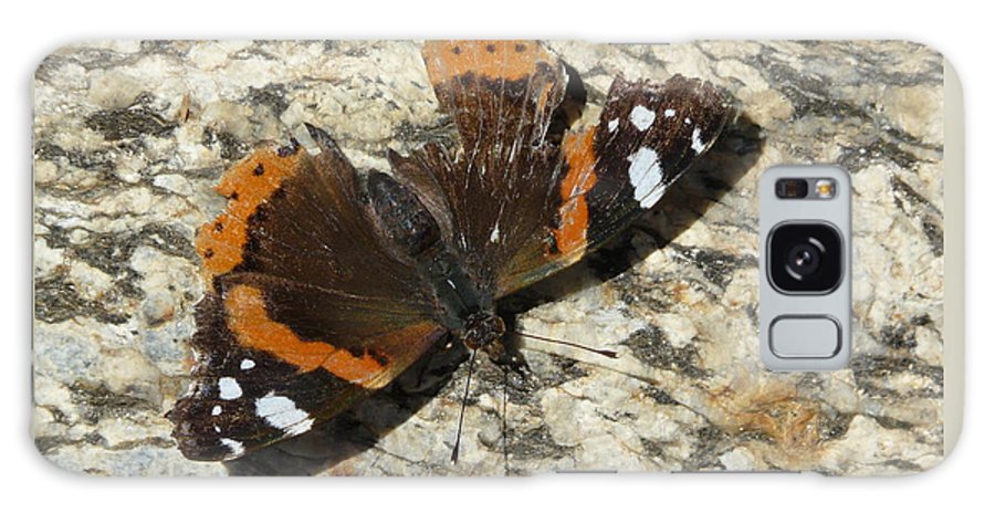 Butterfly Galaxy S8 Case featuring the photograph Battered Butterfly by Valerie Ornstein