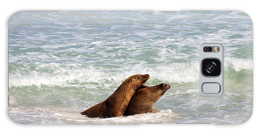 Sea Lion Galaxy Case featuring the photograph Battle For The Beach by Mike Dawson