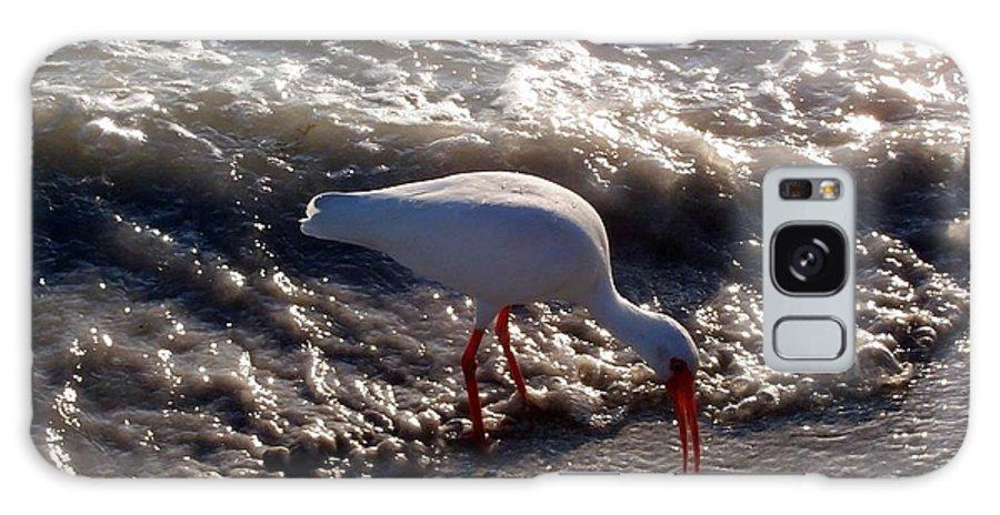 Beach Galaxy S8 Case featuring the photograph Beach Bird by Elizabeth Klecker