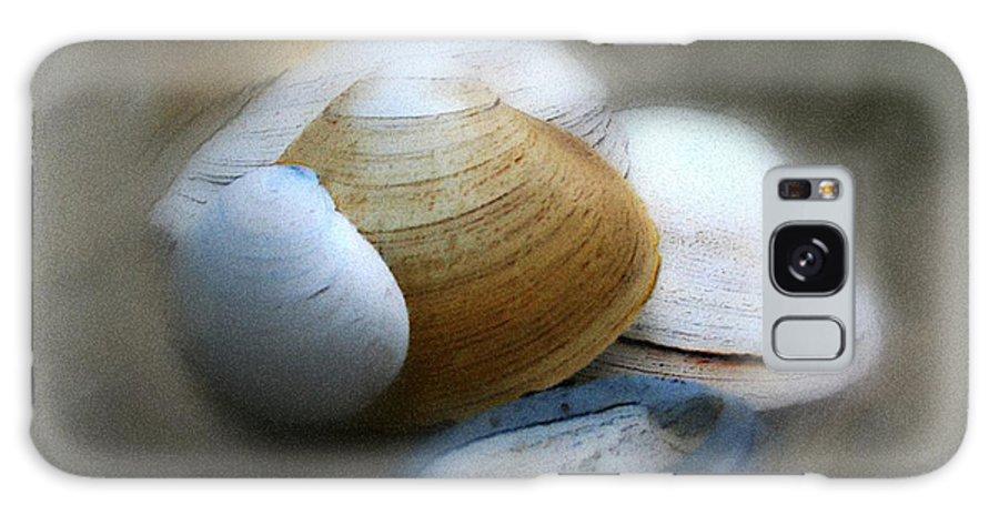 Nature Galaxy S8 Case featuring the photograph Beach Shells by Linda Sannuti