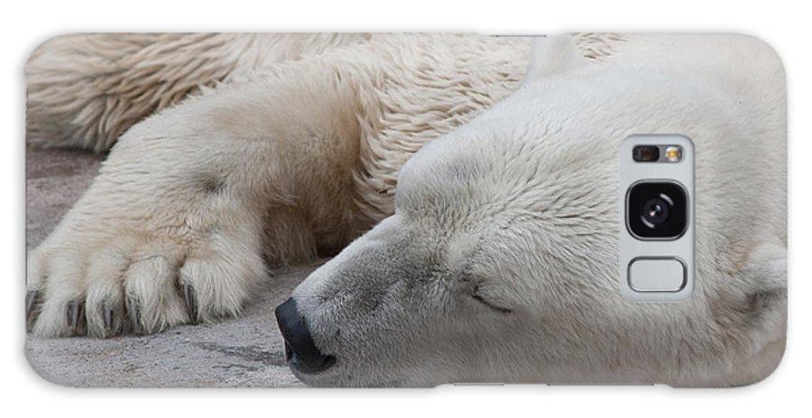 Polar Bear Galaxy S8 Case featuring the photograph Bear Nap by Cindy Haggerty